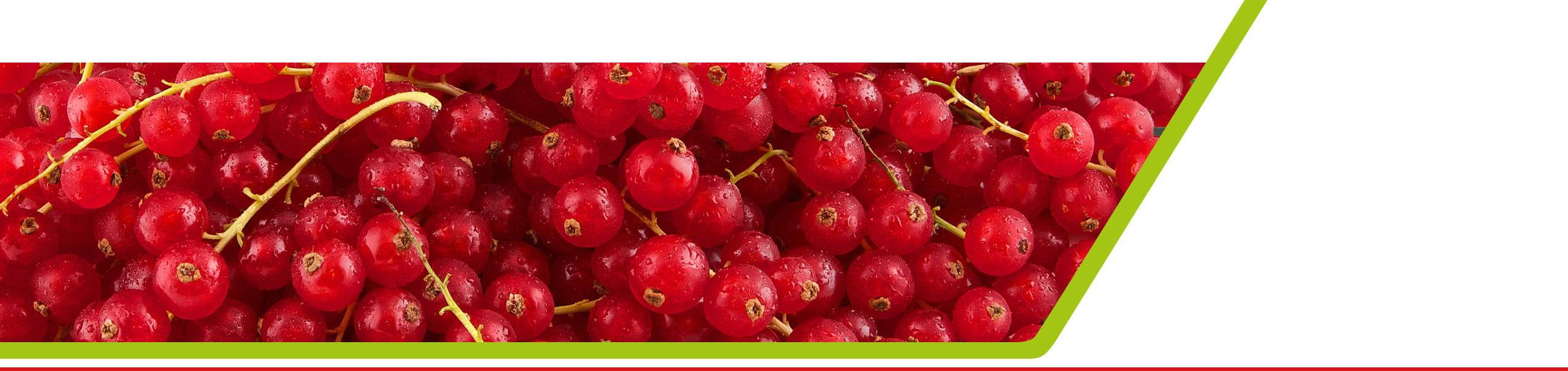 Zachtfruit